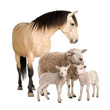Программа для животноводства