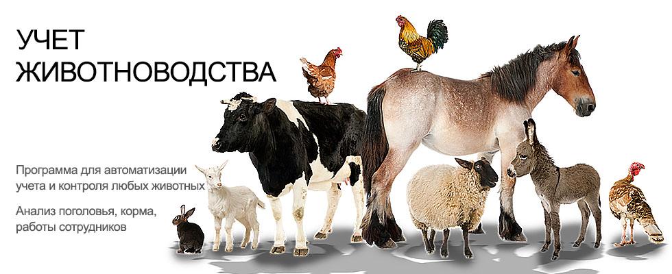 Учет кормов в животноводстве КРС